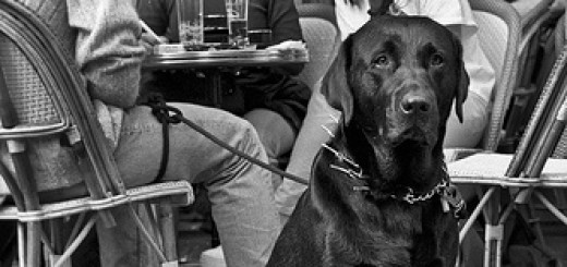 Nice doggie in public