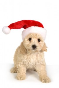 Puppy in Holiday Spirit