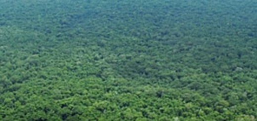 Bolivian Rainforest, Aerial View
