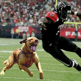 vick dog fight