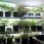 growroom1_sm