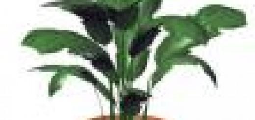 pottted-plant.thumbnail