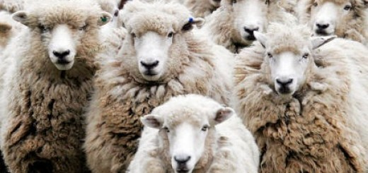 flock of properly educated sheep