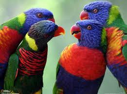 bird gossip