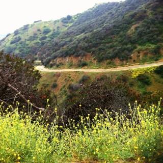 runyon flora