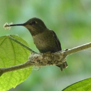 nest maker